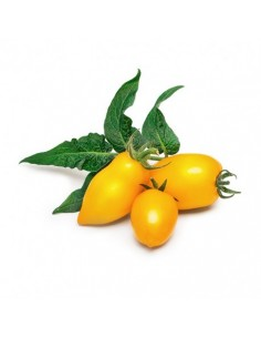 veritable-nbbx31xxxxvb-vegetable-seed-tomato-1.jpg